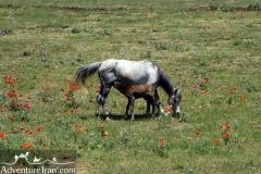 Talesh-Gilan-Iran-1184-03
