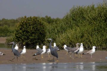 Iran Tours Birding from North to South in Iran